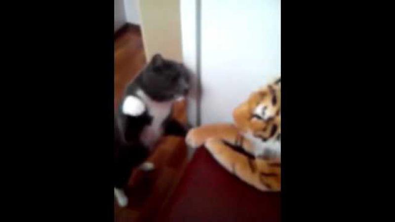Кот бьет игрушечного тигра прикол 14.12.15 кот боксер побил тигра