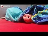 Pig vs Cookie