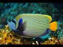 Морской Рифовый Аквариум Помакантовые Рыбы Ангелы