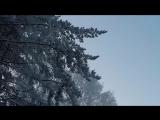 Зимний лес, снято на Gopro 4