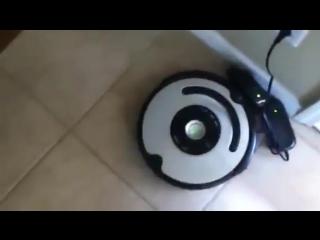 Что будет, если робот-пылесос будет убирать за Вашей собакой