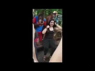 Орангутанг начал приставать к туристке, пока она позировала на фото