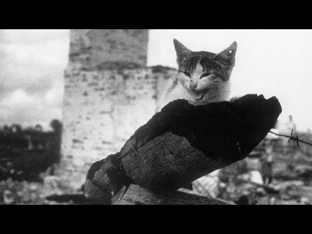 Коты. Кошки и коты - Мы тоже служили Родине.Блокада Ленинграда.