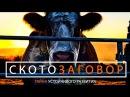Документальный фильм Скотозаговор на русском, русская озвучка, русский перевод.