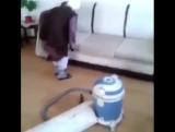 Когда ты ещё пьяный, и пытаешься убрать квартиру до прихода родителей ? #virusvideo
