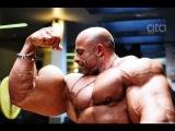 TOP 6 Bodybuilders from Arab World