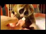 самые смешные приколы про животных видео приколы с животными до слез