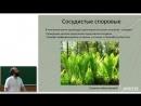 Лекция 27. Систематика высших растений
