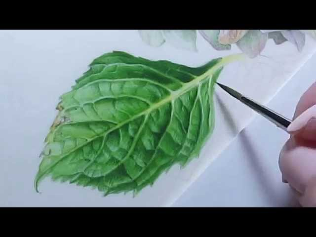 Watercolor Hydrangea Leaf
