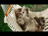 Funny Cat & Cute Kittens Fail Videos - The Best Funny Kitty Cat Video № 15 | Morsomme Katter № 15