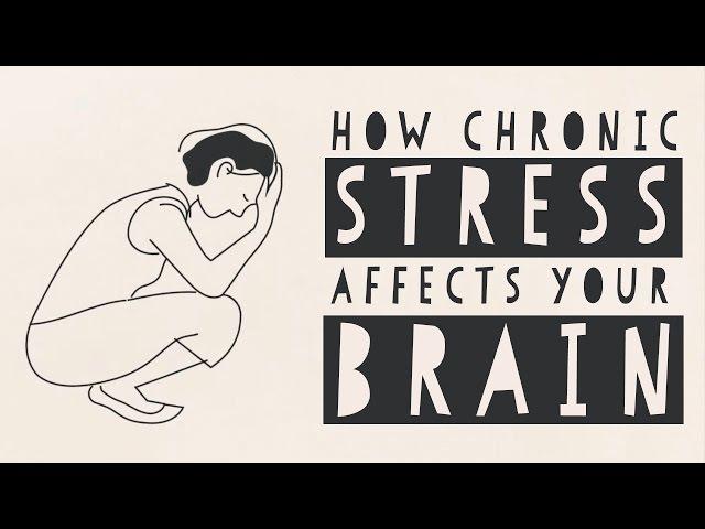 How stress affects your brain Madhumita Murgia