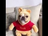 Winnie-the-Pooh =))
