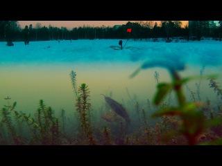 Зимняя рыбалка. Хищник хватает живца! Жерлица. Подводная съемка