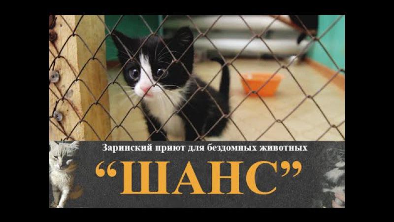 4 минуты из жизни Заринского приюта для бездомных животных ШАНС | Заринск в Ютубе