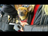 C собаками в кафе / СИБА ИНУ / шопинг в  MAC- Alisa Blad