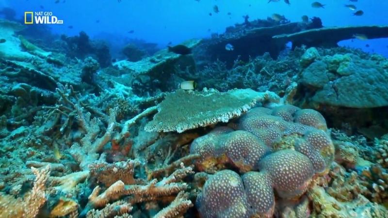 Жизнь на Большом Барьерном рифе (2014)