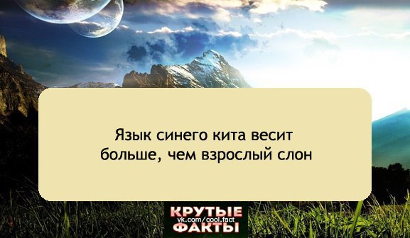 http://cs633330.vk.me/v633330705/3e66/aNOt-GlyZ3k.jpg