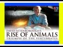 BBC: История животного мира с Дэвидом Аттенборо: Из моря в небо / 1 серия