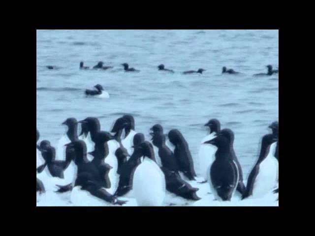 Презентация Национального парка «Русская Арктика»