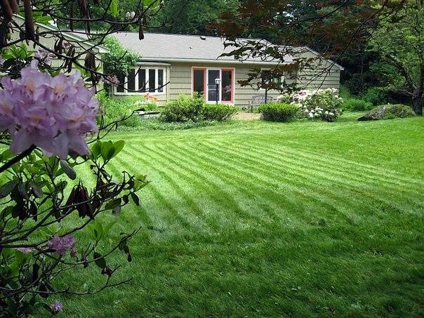 Нужно ли удобрять газон?