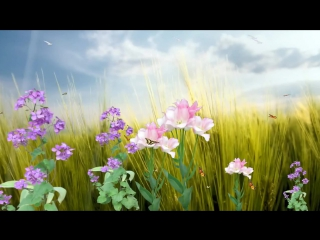 Бабочки и цветы.  ФУТАЖ