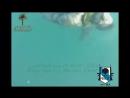 Irak Soldados Iraquies Aparecen Flotando en el Rio de Faluya 9 Abril 2014