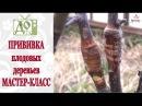 Прививка плодовых деревьев ПРОСТОЙ и ДЕЙСТВЕННЫЙ СПОСОБ МАСТЕР КЛАСС