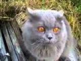 Говорящий кот : КОТ - КУЗЯ ГАД