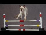 дрессированный кот, правда или вымысел?!