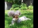 Знакомьтесь, это Валли, кролик с самыми потешными ушами на свете