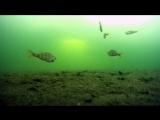 Зимняя рыбалка на окуня, в глухозимье, озеро
