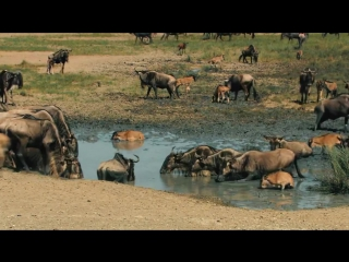 Национальный парк Серенгети (великие миграции)
