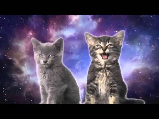 Смешные и няшные котята клип.
