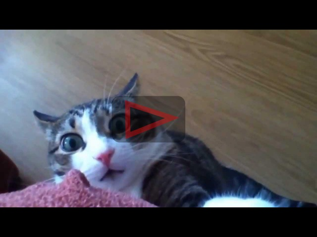 Funny Shocked Cats Compilation