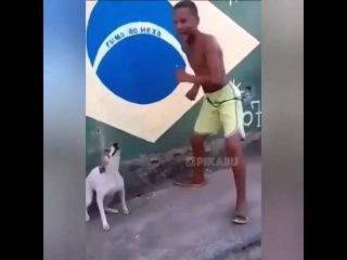 Собака танцует,охренеть