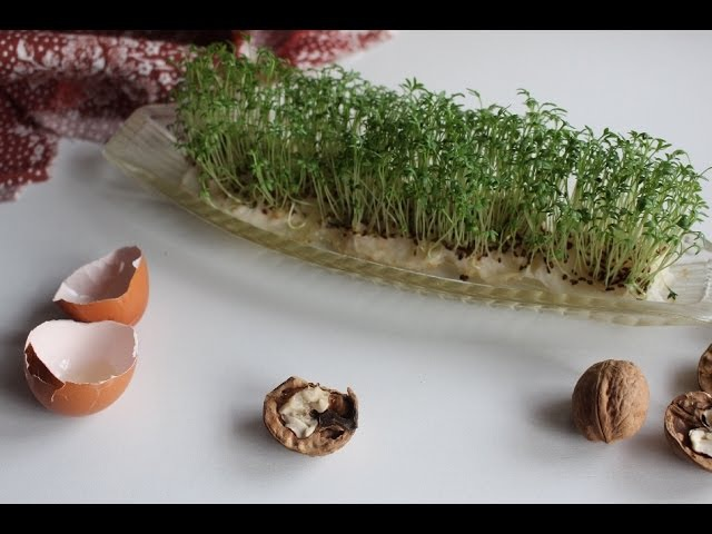 Как вырастить кресс-салат на подоконнике\\ Как вырастить зелень на подоконнике