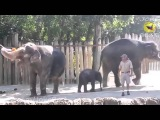ПРЕДУПРЕЖДАЮ! Это самая смешная подборка видео про Животных Смех До Слёз!