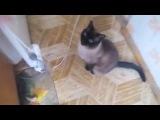 ТИГР ХОУМ ЕДИШН (Vine Video)