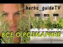 ВСЕ О РОЗМАРИНЕ. Самое полное видео: как готовить, как выращивать и как размножат