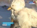 Птичье царство в Тимашевском районе