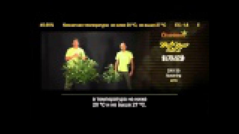 AMS | гроу репорт Green House Seeds с переводом от магазина Семяныч