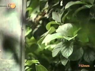 Теория НЕвероятности: Язык растений