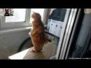 Смешное видео про животных. Приколы с животными. Приколы про кошек 1 2016