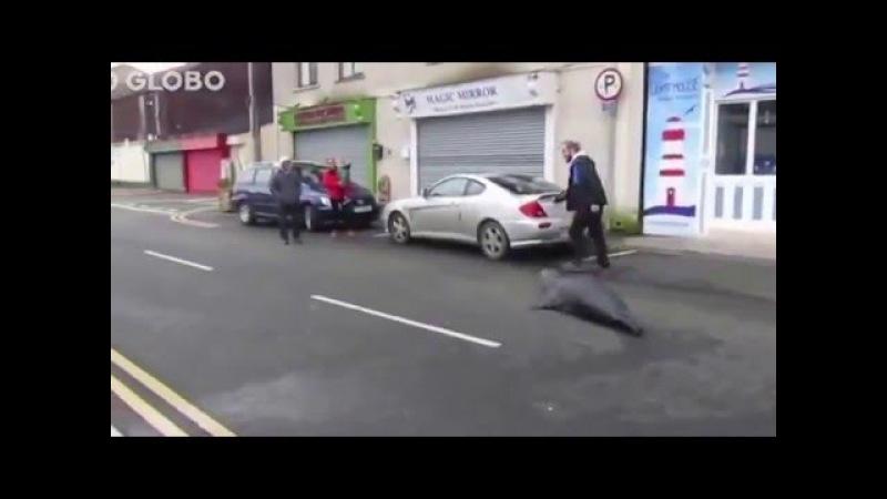 Foca tumultua trânsito e acaba barrada em restaurante na Irlanda