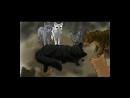 Коты-воители . Смерти