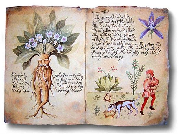 корни трав и целительство