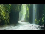 Background Music of Japanese Flute - Naked sound of the forest
