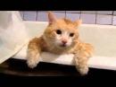 жирный коте в ванной