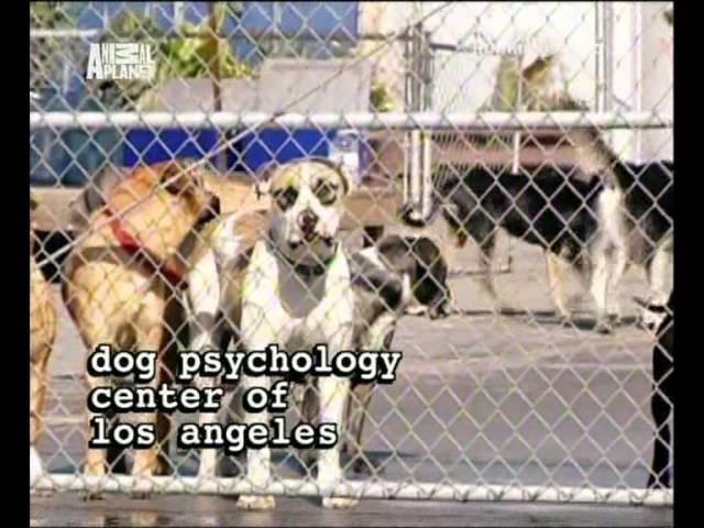 Переводчик с собачьего (сезон 1 серия 05 из 26 2004)
