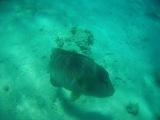 Трейлер канала aqua hunter  Trailer channel aqua hunter